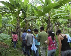 CONSERVACIÓN DE LOS BOSQUES AMAZÓNICOS MEIDANTE LA CUSTODIA TERRITORIAL Y EL DESARROLLO