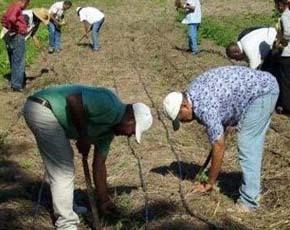 Desarrollo de las capacidades locales para promover modelos sostenibles de producción diversificada orientada a la garantía alimentaria y el desarrollo económico de las familias de la sección de Guayajayuco, Provincia Elías Piña, República Dominicana