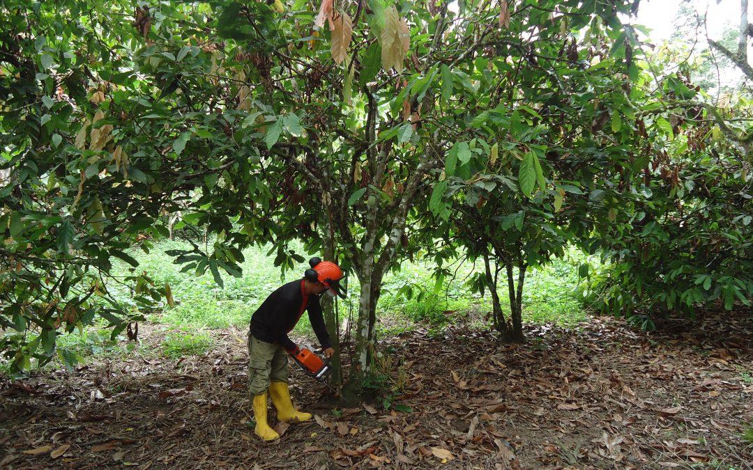 Desarrollo territorial e impulso de la agricultura sostenible y el comercio justo en Esmeraldas
