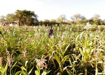 Producción agropecuaria y mejora de la salud
