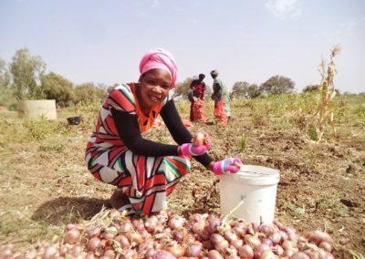 Producción agropecuaria y mejora de la salud (FASE I)