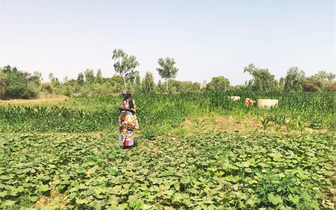 Union des Agriculteurs et Producteurs de Podor (UAPP)