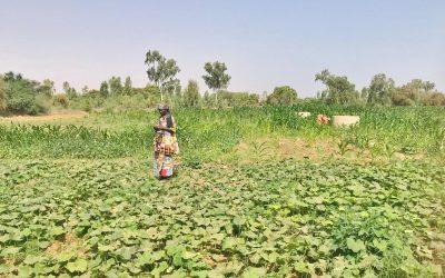 Resiliencia ante la crisis alimentaria en Fanaye