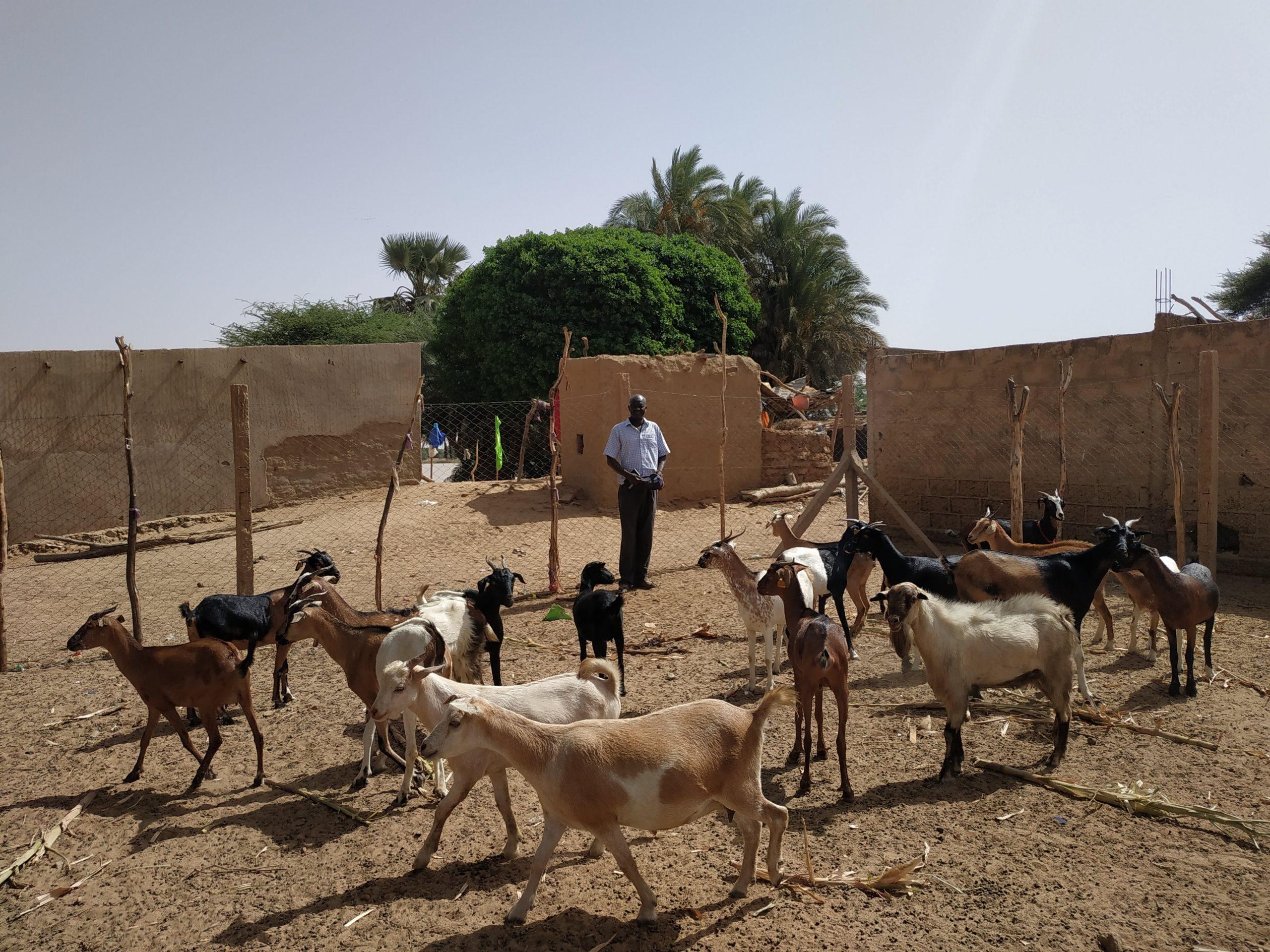 Mujeres rurales en Senegal. Resiliencia ante la adversidad
