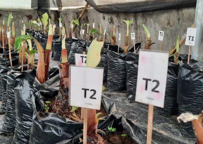 Fortalecimiento de la agricultura familiar campesina y el comercio justo